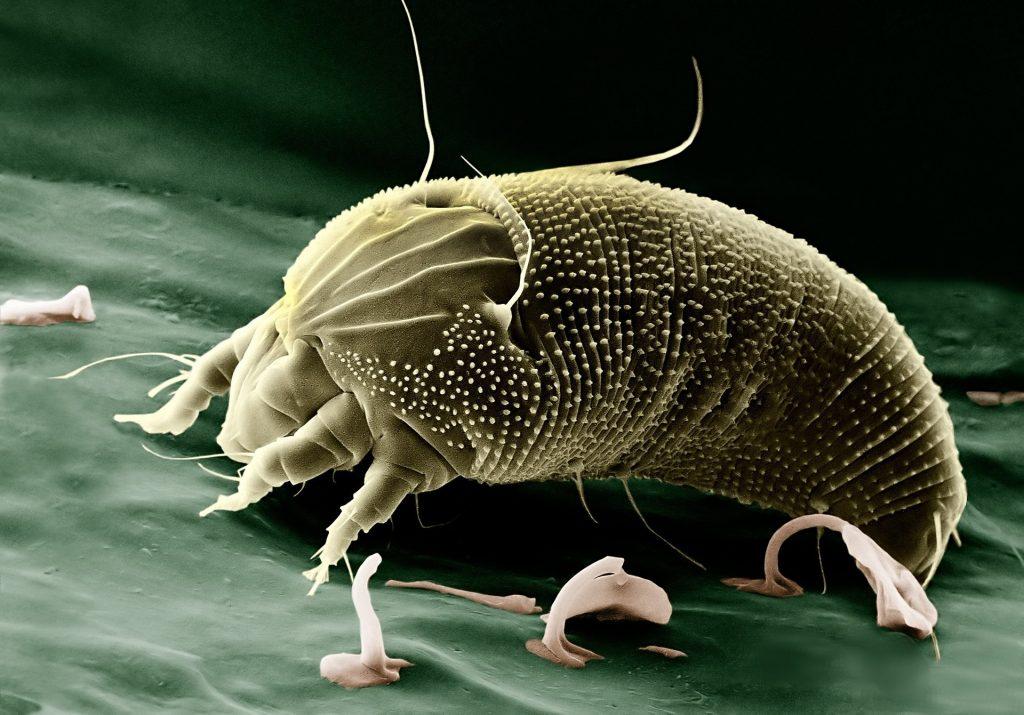 Alergias a los ácaros del polvo
