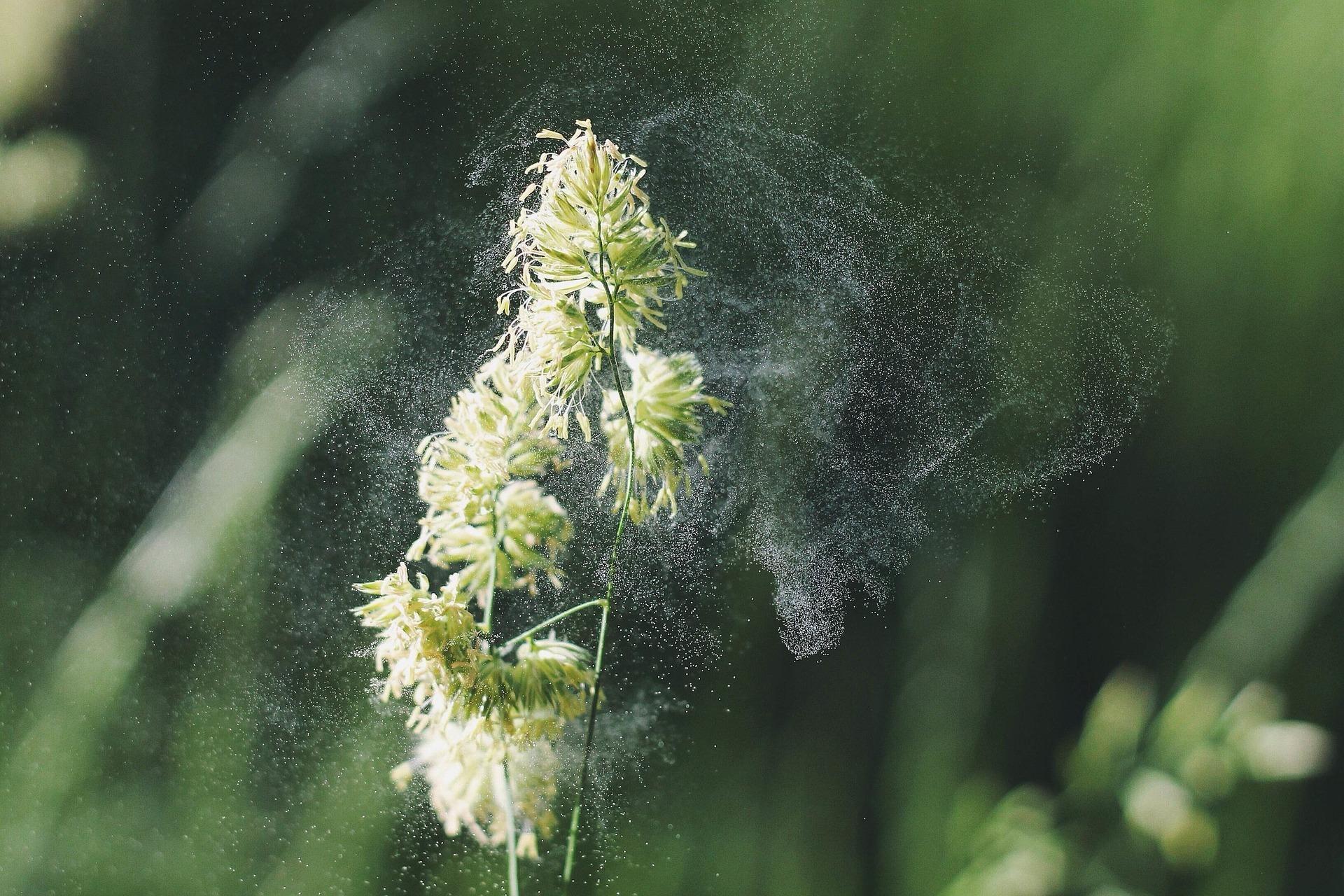 Alergias en la piel, alimentarias, al polen ¿Que son, cuantos tipos hay?